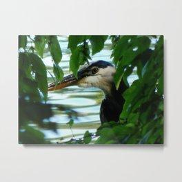 Hiding Heron Metal Print