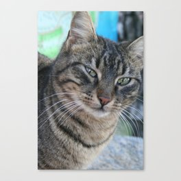Inquisitive Tabby Cat With Green Eyes  Canvas Print