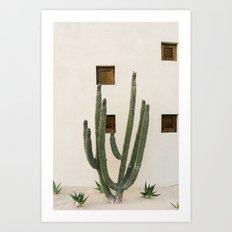 Cabo Cactus IX Art Print