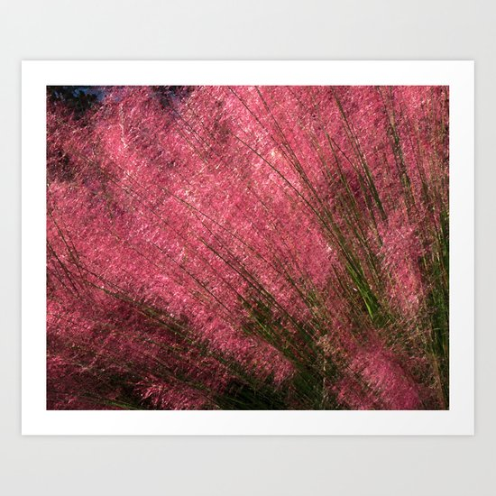 Pink Sweetgrass Art Print