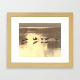 Seagull Reflection Framed Art Print