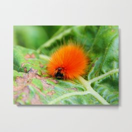 Hairy Caterpillar on Sunflower Leaf Metal Print