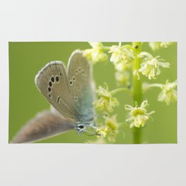 Butterfly on Spring flowers Rug