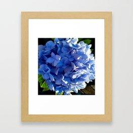 Blue Hydrangia Flower Blossom Framed Art Print