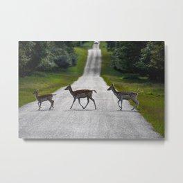 Deer crossing the road Metal Print