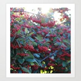 Wild Berries & Christmas Light Art Print