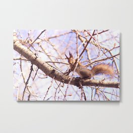Lovely & Curious Squirell  Metal Print