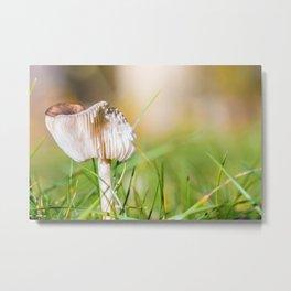 Brown mushroom in grass in autumn Metal Print