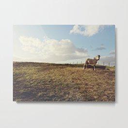 Where the wild horses roam Metal Print