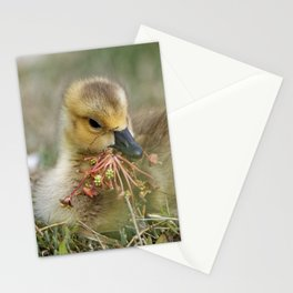 Baby Gosling Collecting Flowers Stationery Cards