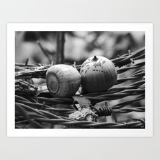 still life with barbed wire Art Print