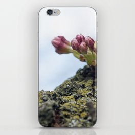 Cherry Blossoms 5 iPhone Skin