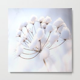 Snow covered dryflower Metal Print