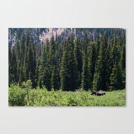 Rocky Mountain Moose Canvas Print
