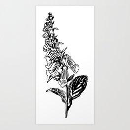 wild flower: digitalis purpurea Art Print