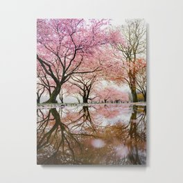 reflective cherry blossoms trees pink petals of flowers Metal Print