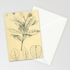 Bothalia 1921 Stationery Cards