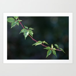 Twigs & Leaves Art Print