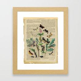 Book Art Caterpillar, Moths & Butterflies Framed Art Print