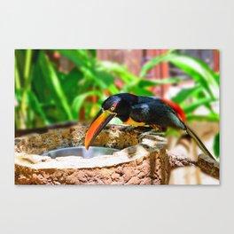 Fiery-billed Toucan Canvas Print