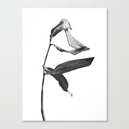 WABI SABI Dead Leaves. Canvas Print