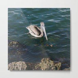 Pelican Paddles DPG160301c Metal Print
