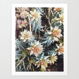 orange succulent Art Print