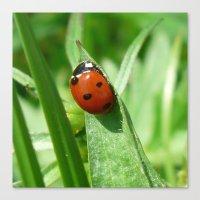 ladybug Canvas Prints featuring Ladybug by MehrFarbeimLeben