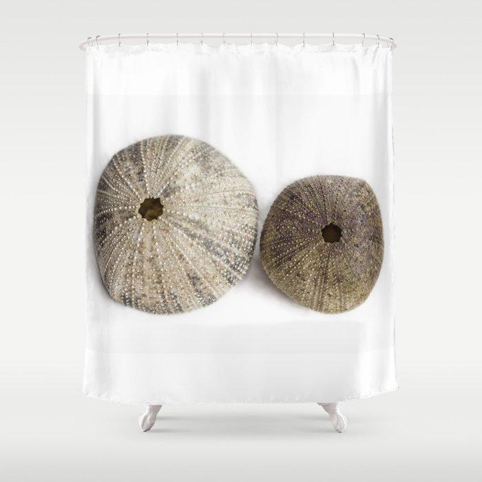 Sea Urchin Shells Shower Curtain
