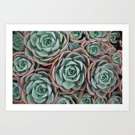 Pink & Green Succulent Garden Art Print