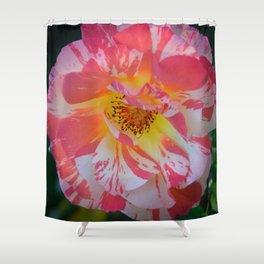 Carnival Rose by Teresa Thompson Shower Curtain