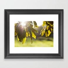 leaves at sunset Framed Art Print