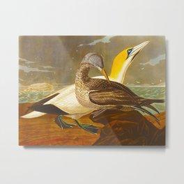 Gannet Bird Metal Print