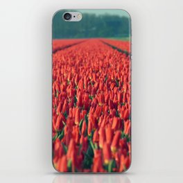 Tulips field #8 iPhone Skin