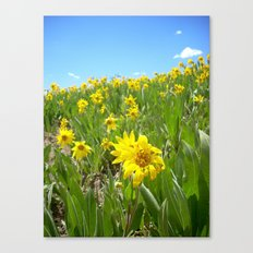 Hello Sunny Canvas Print