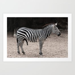 A Very excited Zebra Art Print