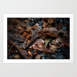 The Mighty Oak Art Print
