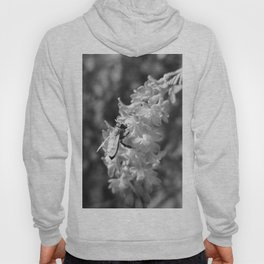 Bee2 and Blood Currant Ribes Sanguineum bw Hoody