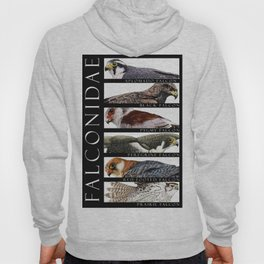 Falcons of the World Hoody