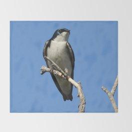 Male Tree Swallow Throw Blanket