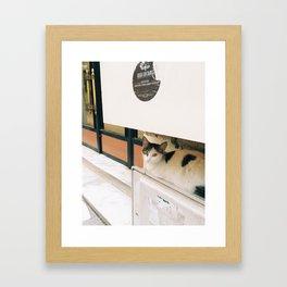 kedi.2 Framed Art Print