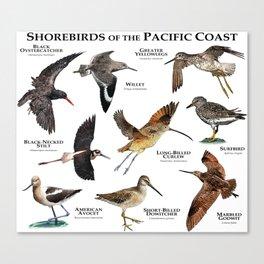 Shorebirds of the Pacific Coast Canvas Print