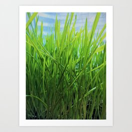 Wheat Grass in Motion Art Print
