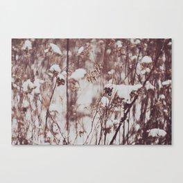 Winter Field Canvas Print