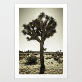 Joshua Tree Shine Art Print