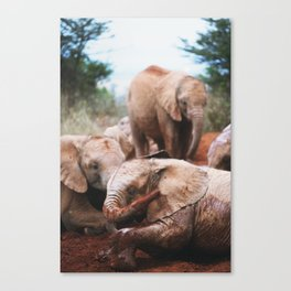 Baby elephants Canvas Print