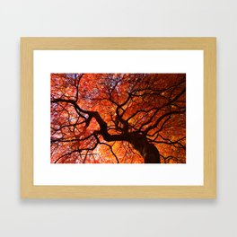 Ephemeral - Fall Maple Leaves, Nature Photography Framed Art Print