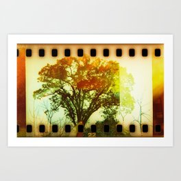 life of tree Art Print