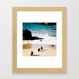 Boulders Beach Penguins Framed Art Print