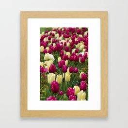 More tulips Framed Art Print
